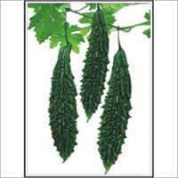 Vijeta - Bittergourd (Hybrid) Seeds
