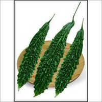 Vikram - Bittergourd (Hybrid) Seeds