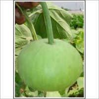 Makhmal - Bottle Gourd (Hybrid) Seeds