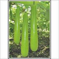 Vasundra - Bottlegourd (Hybrid) Seeds