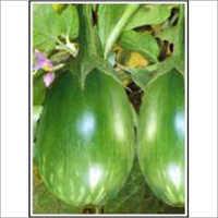 Ds-108 - Brinjal (Hybrid) Seeds