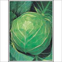 Early Golden Acre - Cabbage (Open Pollinated) Seeds