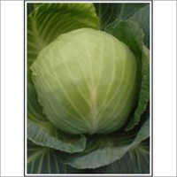 Selection-51 - Cabbage (Super Selection) Seeds