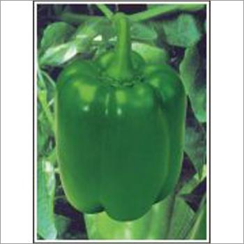 Mallika - Capsicum (Hybrid)