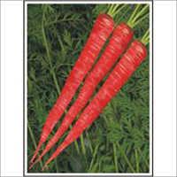 Gulab - Carrot (Hybrid) Seeds
