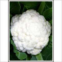 Apsara - Cauliflower (Hybrid) Seeds