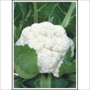 DS 210 - Cauliflower (Hybrid) Seeds