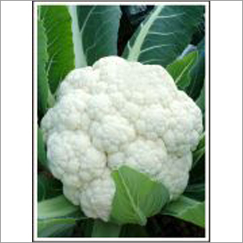 Aishwarya - Cauliflower (Super Selection)  Seeds