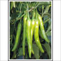 Chilli (Hybrid) Seeds