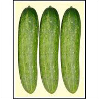 Winner - Cucumber (Hybrid) Seeds