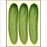 Winner - Cucumber (Hybrid) Seeds
