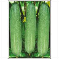 Maharaja - Cucumber (Open Pollinated) Seeds
