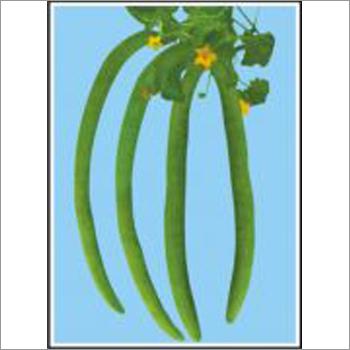 Super Long Green - Long Melon (Open Pollinated) Seeds