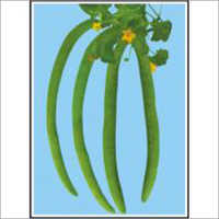 Super Long Green - Long Melon (Open Pollinated) Seeds