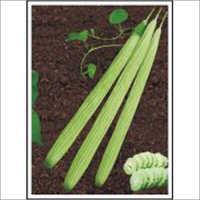 Sweety - Long Melon (Hybrid) Seeds
