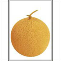Golden Ball - Muskmelon (Hybrid) Seeds