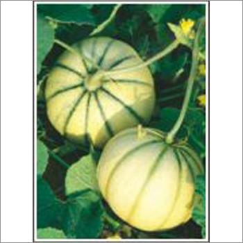 Madhuban - Muskmelon (Hybrid) Seeds