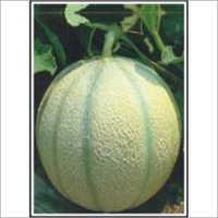 Punjab Hybrid  - Muskmelon (Hybrid) Seeds