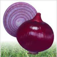 Rose - Onion (Hybrid) Seeds