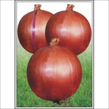 Onion (Hybrid) Seeds