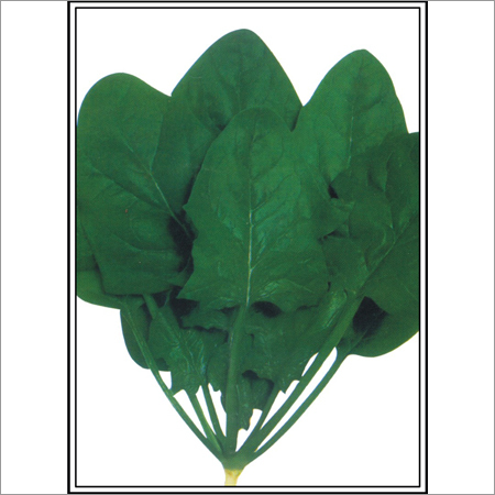 Harihar - Spinach (Palak) (Open Pollinated) Seeds