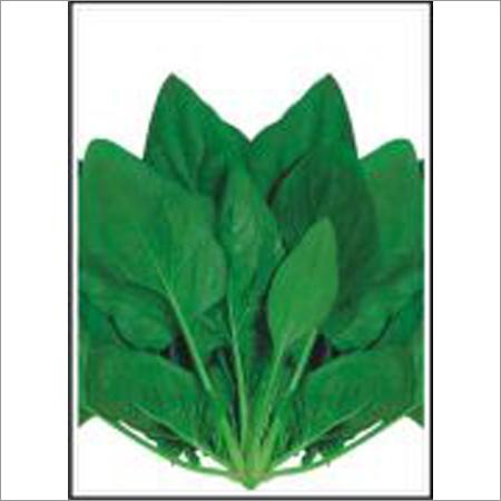 Spinach (Palak) Seeds
