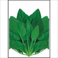 Super All Green - Spinach (Palak) (Open Pollinated) Seeds