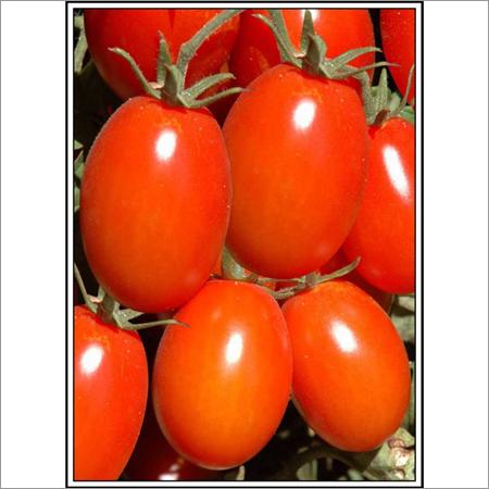 Abhimanyu - Tomato (Hybrid)  Seeds