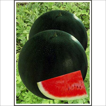 Sugar Baby - Watermelon (Open Pollinated)