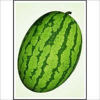 Watermelon (Hybrid)  Seeds