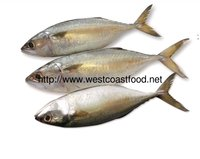 Export Quality Indian Mackerel Fish