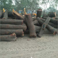 Babool Wood Logs