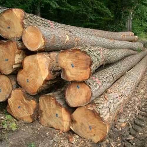 Salwood Log