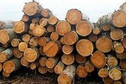 Kapur Wood Log