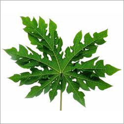Papaya Dry Leaves