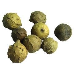 Majuphal(galnut)