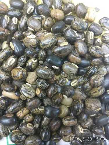 Black Kauch seed