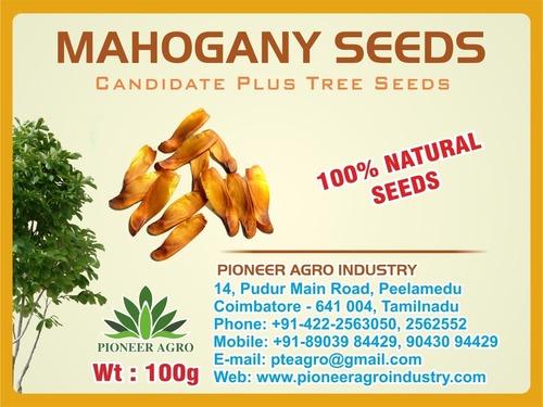 Mohogany Tree Seed ( Swietenia Mahagoni)