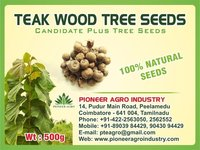 Teakwood Tree Seed