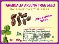 Terminalia Arjuna Tree Seed