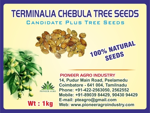Terminalia Chebula Tree Seeds