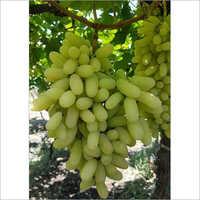 Graps
