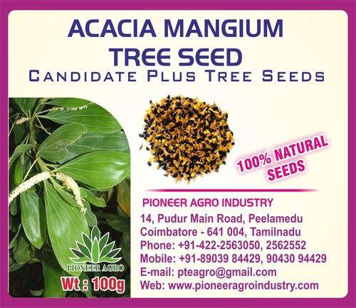 Acacia Mangium Tree Seed