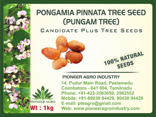 Pungamia Pinnata Tree Seed