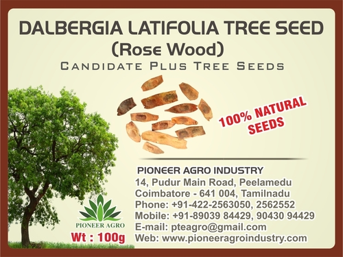 Dalbergia Latifolia Tree Seed (Rose Wood)