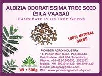 Albizia Odoratissima Tree Seed