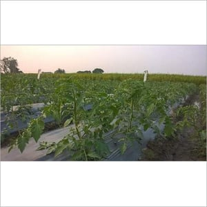 Cylindrical Drip Irrigation Systems