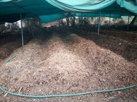 Vermi Compost Fertilizer