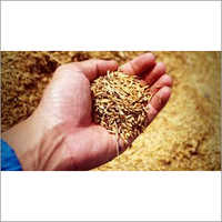 Organic Ranbir Paddy