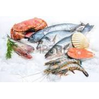 Fresh Frozen Fish